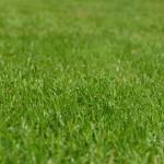 隣の芝生はなぜ青い?あなたの芝生も青々と茂っていますよ!